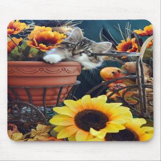 Venus gato del gatito del Coon de Maine del bebé Tapete De Ratones