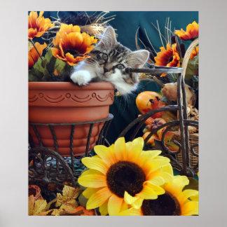 Venus, gato lindo del gatito del Coon de Maine, co Poster