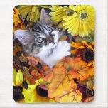 Venus, gato lindo del gatito del Coon de Maine, co Tapetes De Ratones