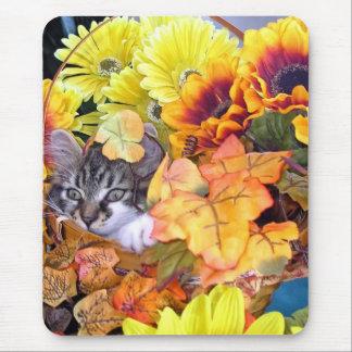 Venus, gato lindo del gatito del Coon de Maine, Tapete De Ratones