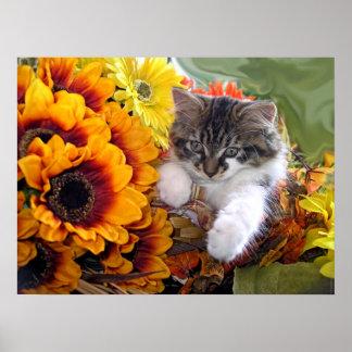 Venus, gato peludo del gatito del Coon de Maine, c Poster