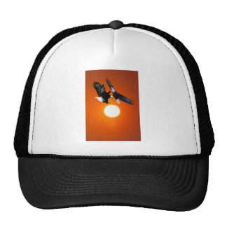 Venus in transit with two eagles mesh hat