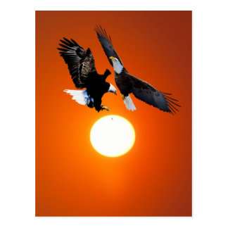 Venus in transit with two eagles postcard