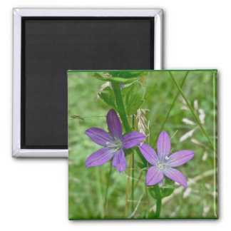 Venus Looking Glass Wildflower 2 Inch Square Magnet