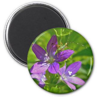 Venus Looking Glass Wildflower Floral Magnet