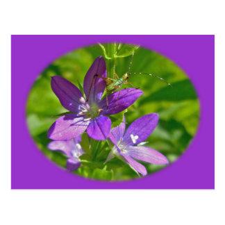 Venus Looking Glass Wildflower Floral Postcard