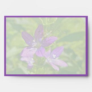 Venus Looking Glass Wildflower & Grasshopper Envelope