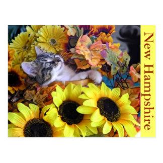 Venus, Maine Coon Kitten Cat, Head leaning Back Postcard
