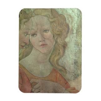 Venus y las tres tolerancias que le ofrecen a rega iman de vinilo