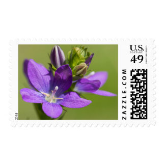 Venus's Looking Glass Purple Wildflower Postcard Postage
