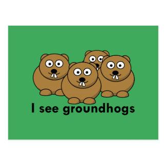 Veo groundhogs tarjetas postales