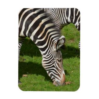 Ver cebras dobles imanes flexibles