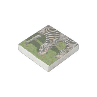 Ver cebras dobles imán de piedra
