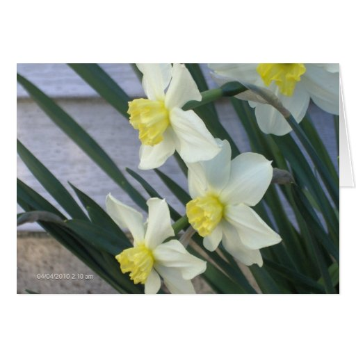 ver las flores del ojo tarjeta de felicitación