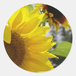 verano-comenzar-sandi-forjador pegatinas redondas