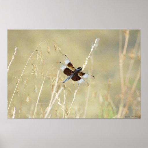 Verano de la libélula impresiones