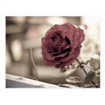 verano rojo de la flor de la rosaleda postal