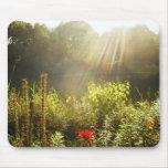 Verano Sun en Central Park, New York City Alfombrillas De Raton