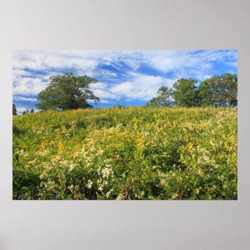 Verano tardío del prado del Wildflower del prado d Impresiones