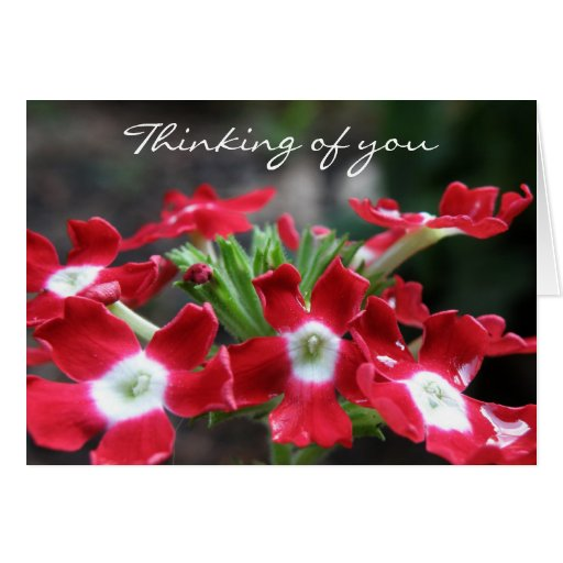Verbena Thinking of you Cards