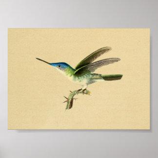 Verde azul 1830 de la impresión del colibrí del póster