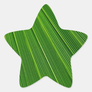 Verde colorido abstracto de hoja de palma pegatina en forma de estrella