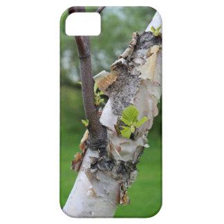 Verde de la macro de la naturaleza de la rama de á iPhone 5 Case-Mate protectores
