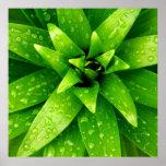 verde de la macro póster