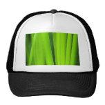 verde de la preparación gorra