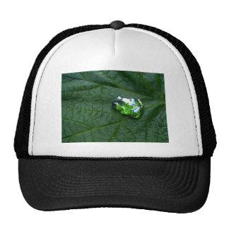 Verde de la rana gorras