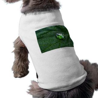 Verde de la rana playera sin mangas para perro