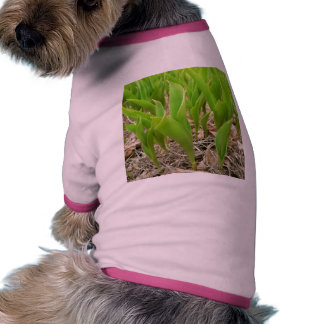 Verde de Lillies Ropa De Perros