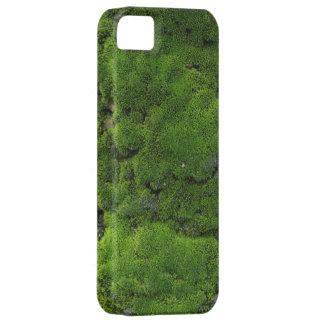 Verde de musgo iPhone 5 fundas