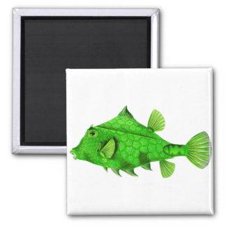 Verde de Turretfish del Humpback Imán Cuadrado