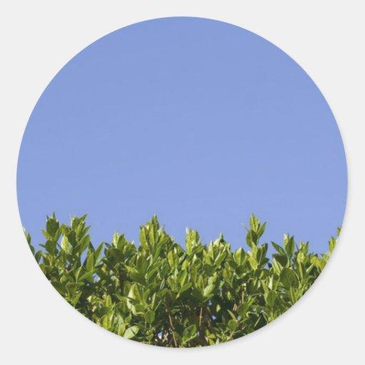 Verde del árbol del seto pegatina redonda