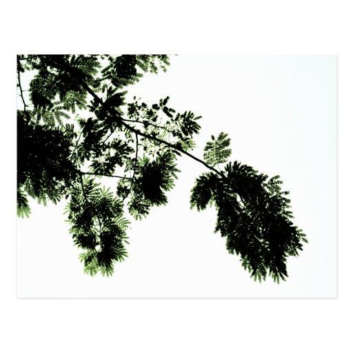 verde en blanco postales