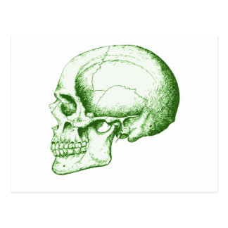 Verde lateral del cráneo postal
