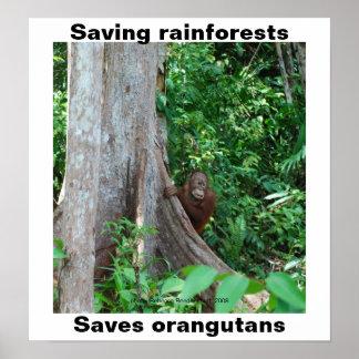 Verde para las selvas tropicales y los orangutanes póster