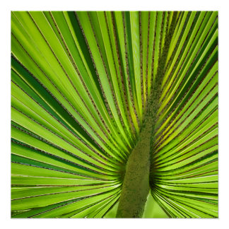 Verde tropical perfect poster