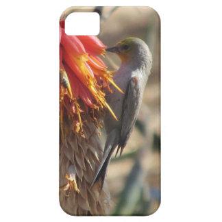 Verdin en el flor del áloe iPhone 5 Case-Mate carcasa