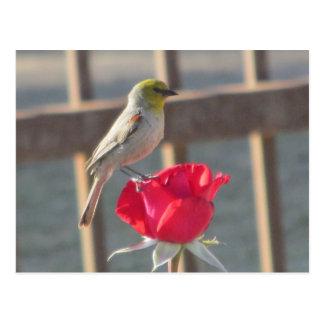 Verdin on Rose Postcard