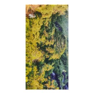 Verdor abundante tarjetas fotográficas personalizadas