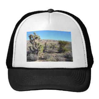 Verdor del desierto gorra