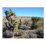 Verdor del desierto postal