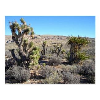 Verdor del desierto postales