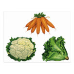 Verduras del vintage; Zanahorias, coliflor, lechug Tarjeta Postal