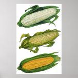 Verduras sanas de la comida del vintage, maíz fres poster