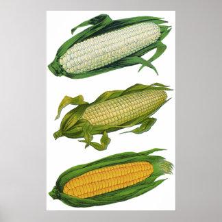 Verduras sanas de la comida del vintage, maíz póster