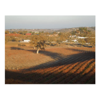 Veris Vineyard in January Postcard