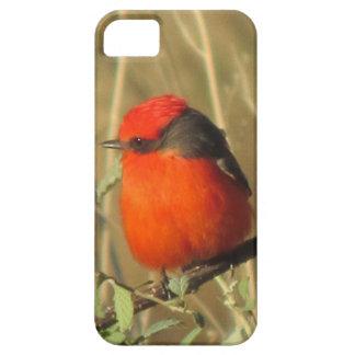 Vermilion Flycatcher iPhone 5 Case
